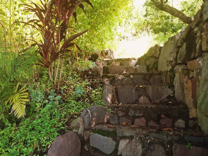 FungiAcademy-GardenPath