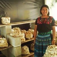 5 Common Mushroom Cultivation Mistakes to Avoid - Fungi Academy