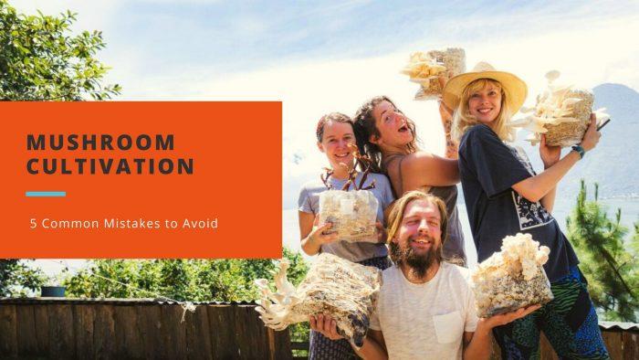 Mushroom Cultivation Mistakes to Avoid