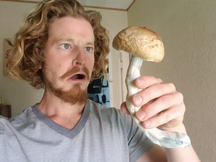 Sam The Mushroom Man with one BIG Psilocybe cubensis