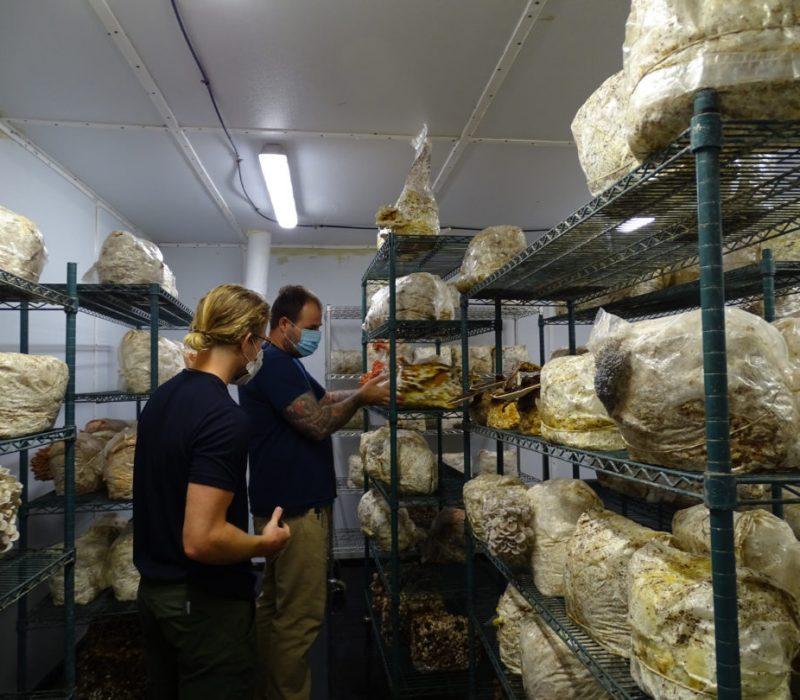 urban mushroom farm