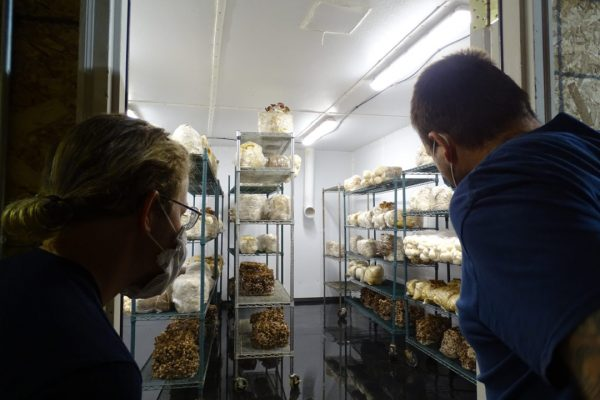 Sam and Devon peer into one of Tivoli Mushroom's fruiting rooms